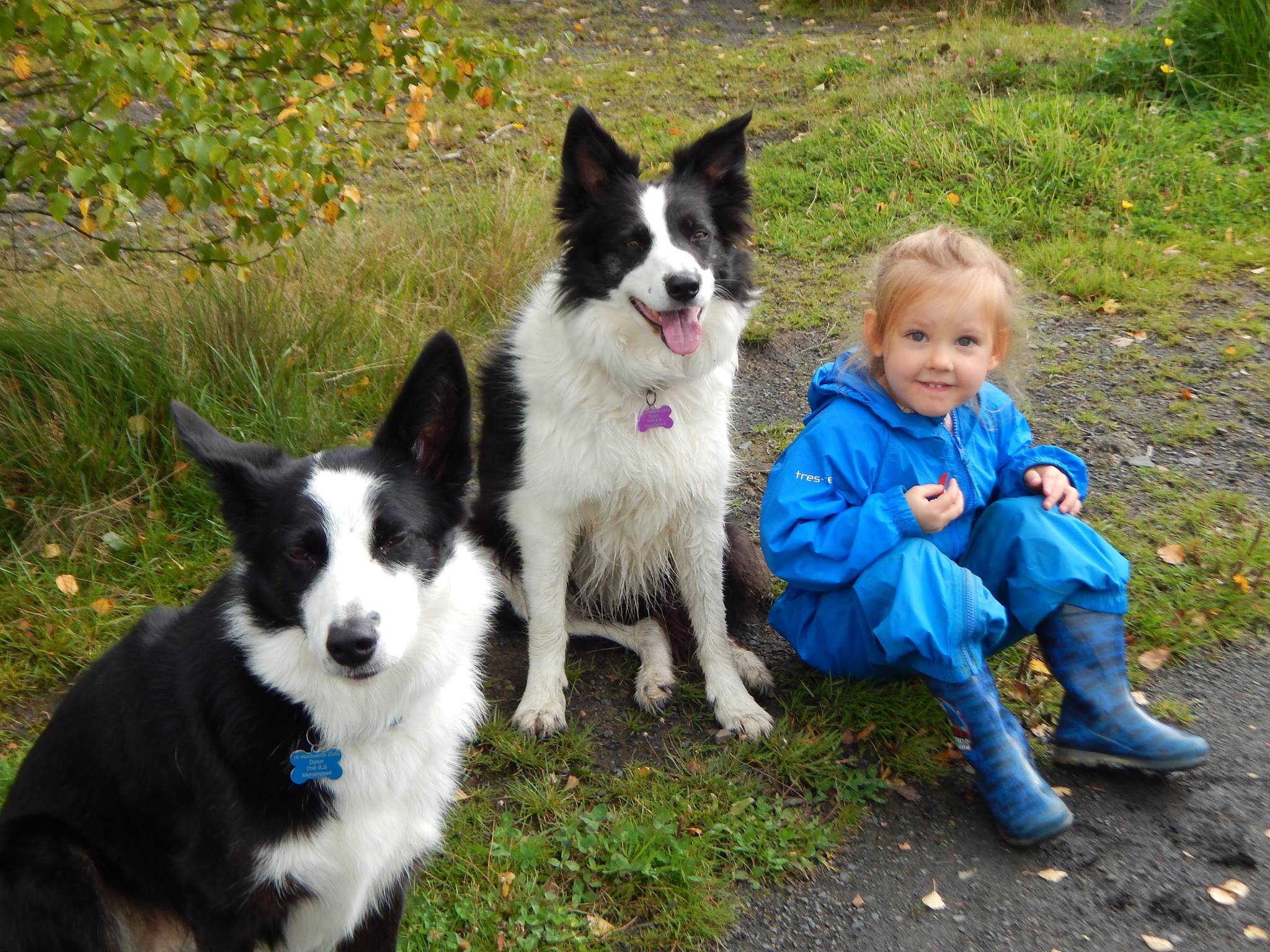 Kids & Canines