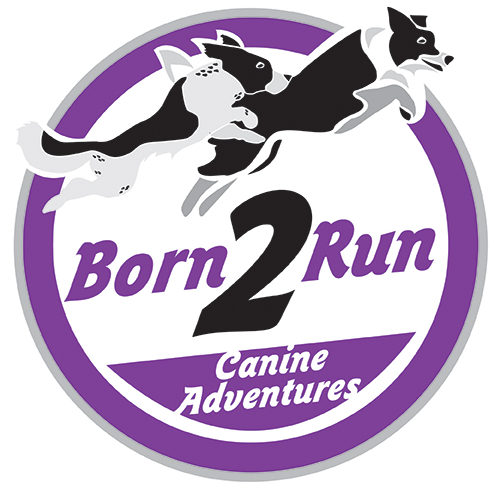 Born 2 Run Pet Care - Premium Canine Adventures